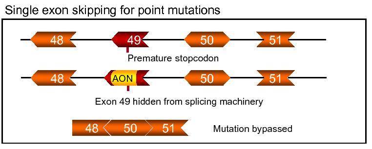 application exonskip single point mutation_figuur 5